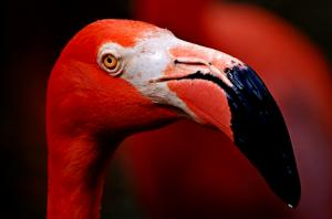 The Open 2014 Photo Contest Featuring Artist Lorenzo Cassina