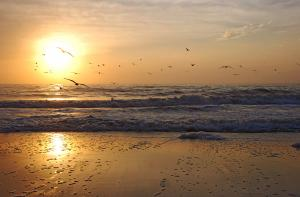 Artist Lorenzo Cassina Receives Photo Of The Day Award