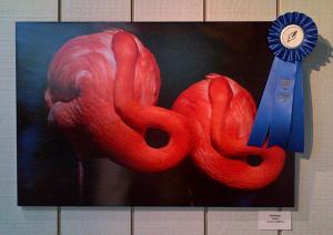 Artist Lorenzo Cassina Is The Winner Of The Wildlife Contest By Flamingo Gardens In Florida