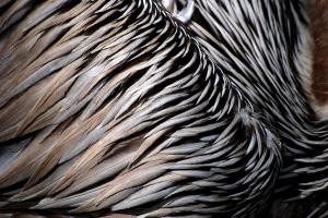 Artist Lorenzo Cassina Receives Photo Award